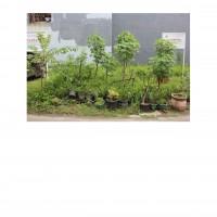 PKNSI - EKS PPA : Lot 2. 1 (satu) bidang tanah luas 77 m2 di Perum. Green Garden Blok C12 No. 3, Rorotan, Cilincing, Jakarta Utara