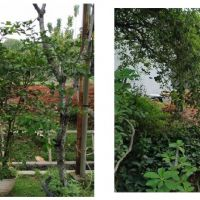 DJKN/PKNSI : lot 44 Sebidang tanah seluas 120 m2, SHGB, di Perum Graha Raya, Cluster Gardenia Loka, Blok F-07 No.23, Kota Tangsel