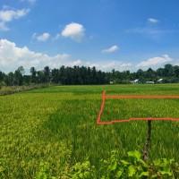 PT. BRI Kantor Fungsional Aceh-Tanah Persawahan seluas 470 M2 sesuai SHM No. 509 An. Muhammad Hatta.