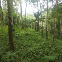 PNM P.Siantar- Sebidang tanah seluas 4.299M2 serta segala sesuatu diatasnya di Desa Talun Kondot Kecamatan Panombeian Panei