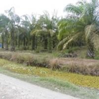 [bss medan] 1c. 3 bidang tanah luas 22.586m2+ 22.100m2+ 19.610 m2 di Desa Sungai Sentang Kec. Kualuh Hilir Kab. Labuhanbatu