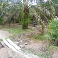 [bss medan] 1f. tanah luas 10.141 m2 di Desa Sungai Sentang Kec. Kualuh Hilir Kab. Labuhanbatu SumUt