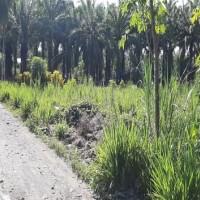 [BRIS4] 1a. Sebidang Tanah seluas 336m2 berikut  turutan diatasnya sesuai SHM No. 8658 di Nag Lingkuang Aua Kec Pasaman