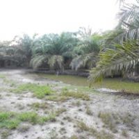 [bss medan] 1h. 2 bidang tanah luas 12.167 m2+ 9.997 m2 di Desa Sungai Sentang Kec. Kualuh Hilir Kab. Labuhanbatu Utara