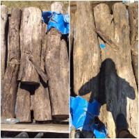 Kejari Kab.Probolinggo Lot 8b) Kayu Sonokeling sebanyak 14 gelondong berbagai macam ukuran volume : 1,05 M3
