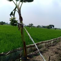 Sebidang tanah SHM No. 01518 luas 2.444 m2 terletak di Desa Kedungsekar, Kec. Benjeng, Kab. Gresik (KSU Central Artha Niaga)