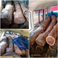 Kejari Kab.Probolinggo Lot 37b) Kayu Sonokeling sebanyak 12 gelondong berbagai macam ukuran volume : 0,78 M3