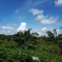 PT. BRI Kantor Fungsional Aceh-Tanah kebun sawit seluas 19.200 M2 sesuai SHM No. 2264 An. Hendri.