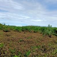 PT. BRI Kantor Fungsional Aceh-Tanah kebun sawit seluas 20.000 M2 sesuai SHM No. 2265 An. Hendri .
