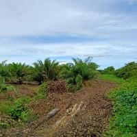 PT. BRI Kantor Fungsional Aceh-Tanah kebun sawit seluas 17.280 M2 sesuai SHM No. 2266 An. Hendri.