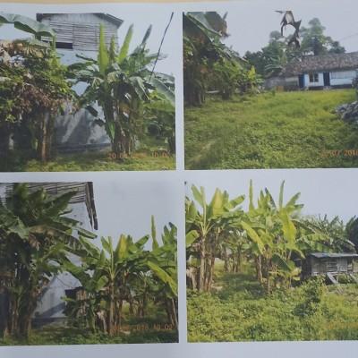 BRI Kalianda - Sebidang tanah SHM No. 135  dengan luas tanah 890 m²  terletak di Desa Merak Belantung, Kec. Kalianda, Lamsel