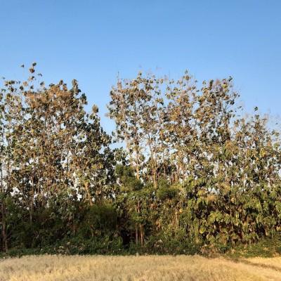 KPRI Kemenag Magetan 3. Tanah seluas 977m2  SHM No.147 terletak di Desa Baluk, Kec.Karangrejo, Kab.Magetan, Jatim