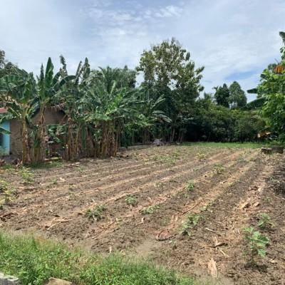 BRI Ismud, Tanah seluas 1359 m2 SHM No 849 di Desa Karang Anyar, Kec Beringin, Kab Deli Serdang